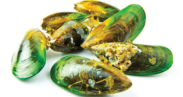Green Lipped Mussel (GLM)