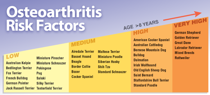 Arthritis Risk Factors in Dogs Chart