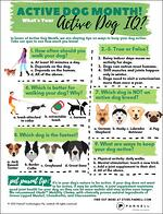 Check your Active Dog IQ with this Test